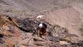 nácvik horského vícedélkového lezení podél ferraty na Jegihorn (3.206m)